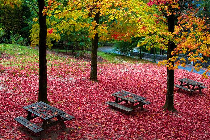 Φθινοπωρινό τοπίο με πεσμένα φύλλα
