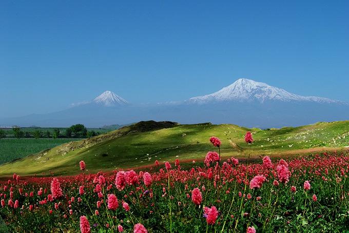 Вид на Арарат, цветущие луга Армении.