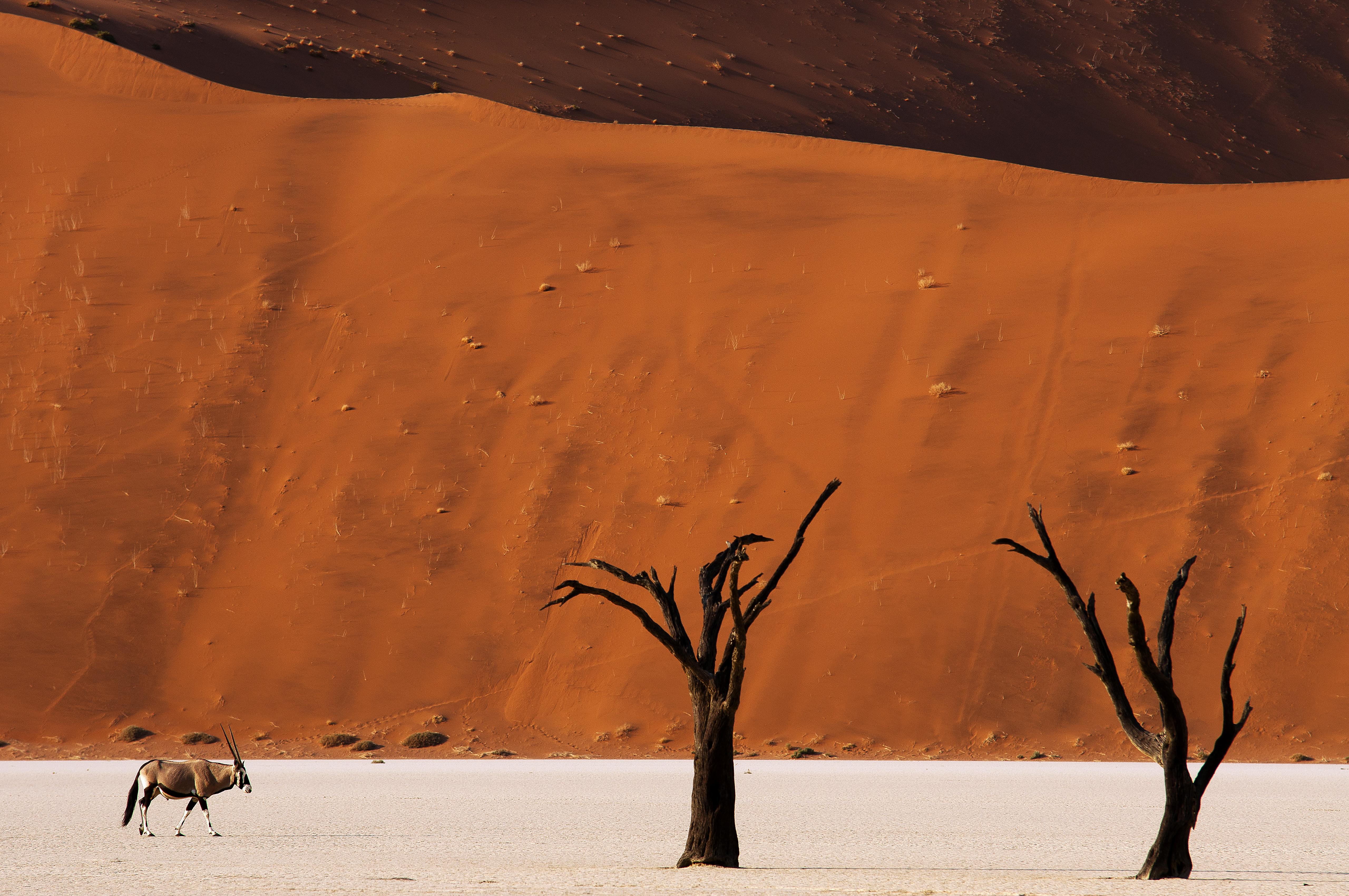 Die 20 spektakulärsten Wunder der Natur: Deadvlei, Namibia