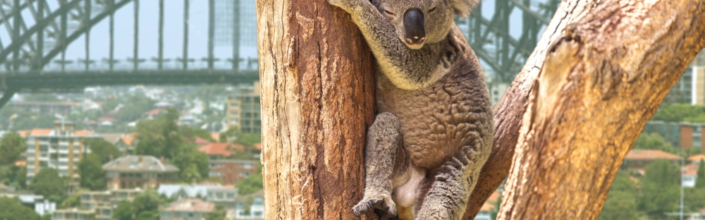 sites de rencontre Kiwi en Australie