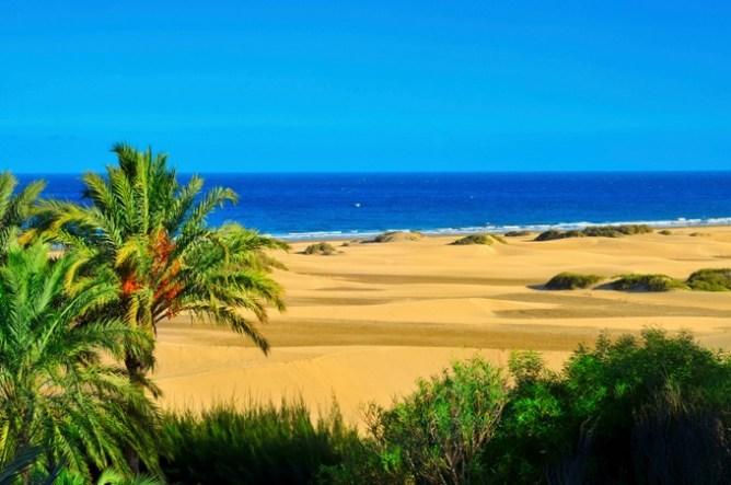 Αμμόλοφοι και φοίνικες στην παραλία Maspalomas