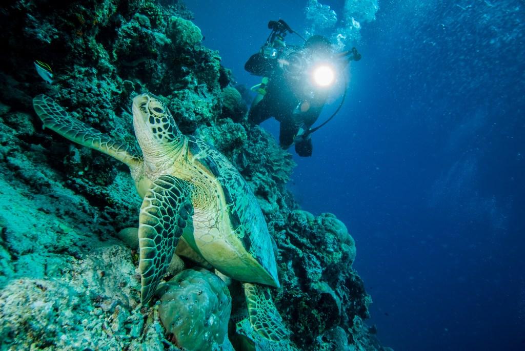 Tauchen mit Meeresschildkröten in Indonesien