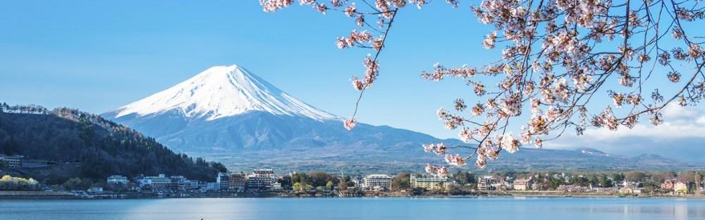 """Kết quả hình ảnh cho sakura in tokyo 2020"""""""