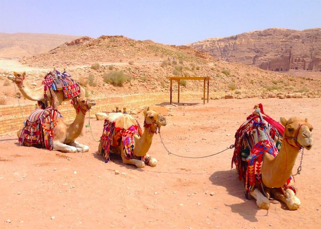 Καμήλες αναπαύονται στην έρημο.