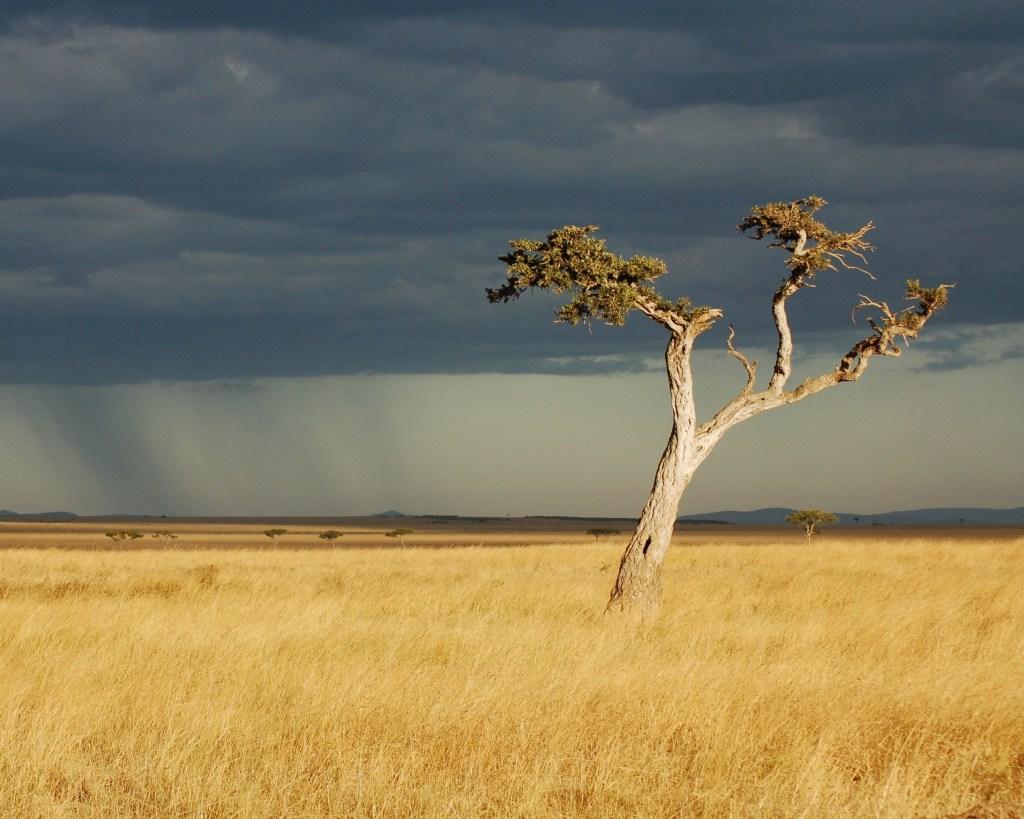 Visto per il Kenya
