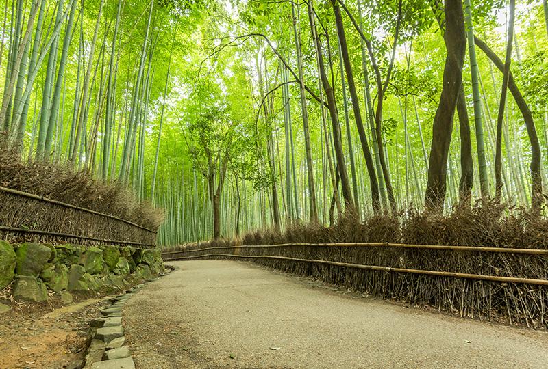 Lugares que ver en Kioto: el bosque de bambú de Arashiyama