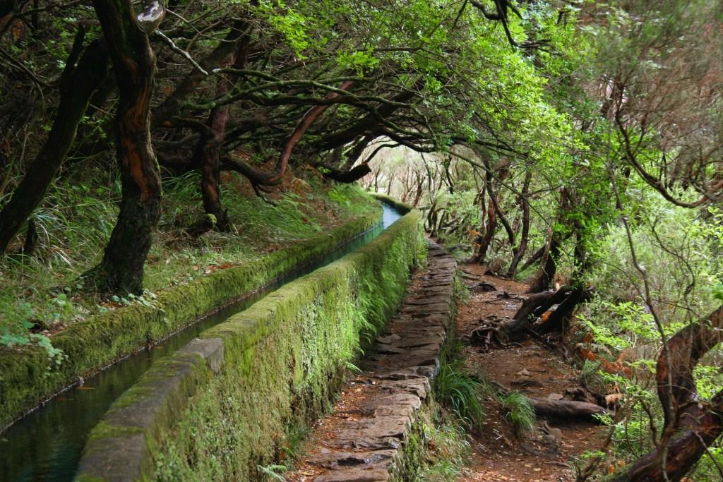 Kαταπράσινο levada για πεζοπορία στη Μαδέρα