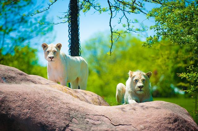 Wild life at the Toronto Zoo.