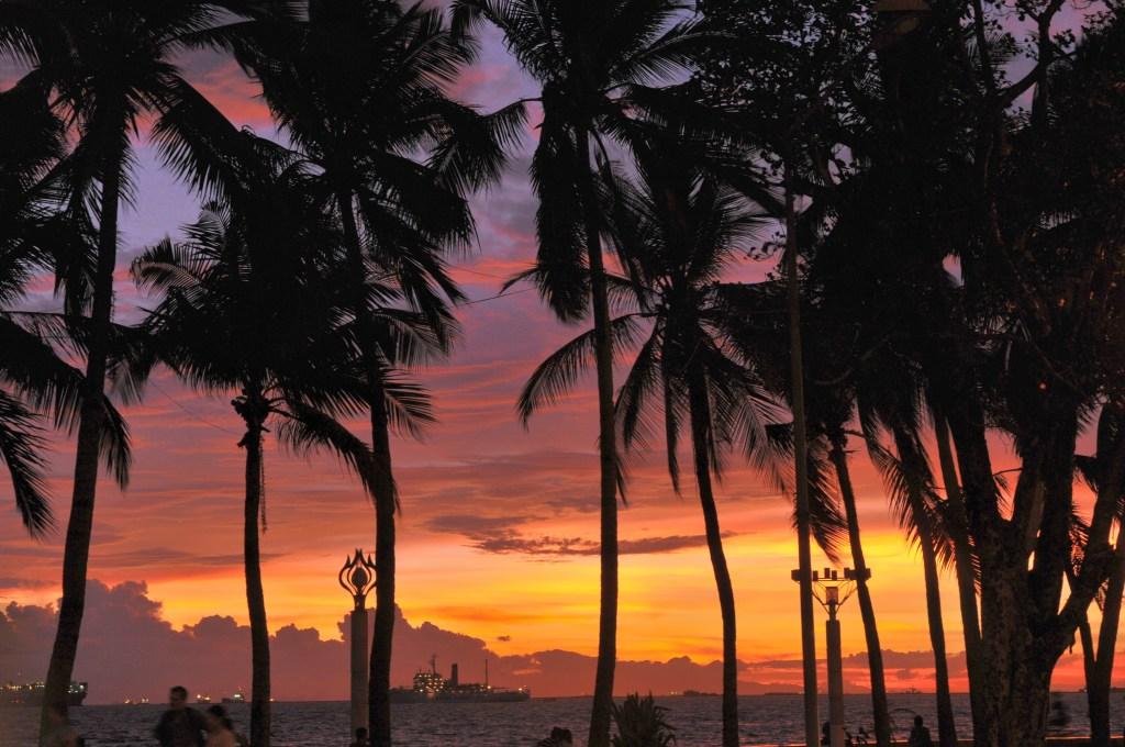Palmer i silhouet, mod rød, pink og gylden aftenhimmel. Udsigt over havet.