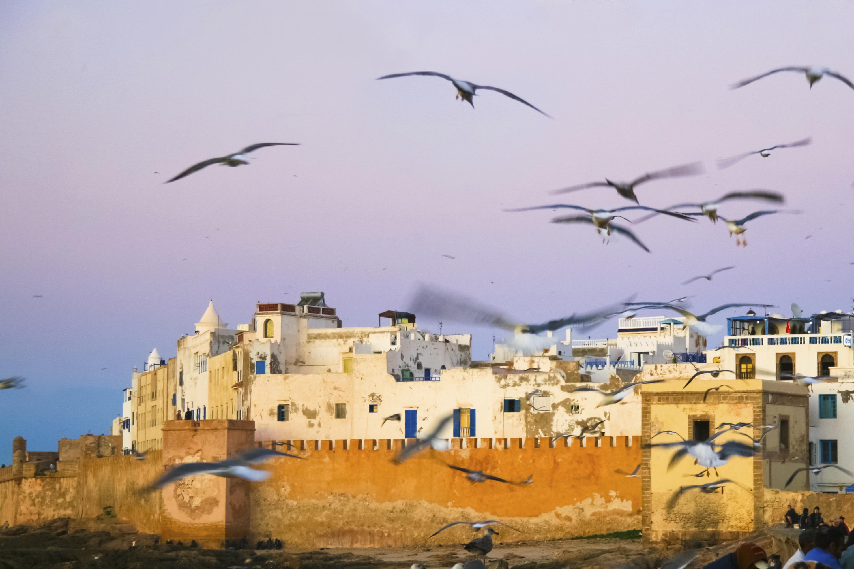 Γλάροι πάνω απ' την Εσαουίρα - διακοπές στο Μαρόκο