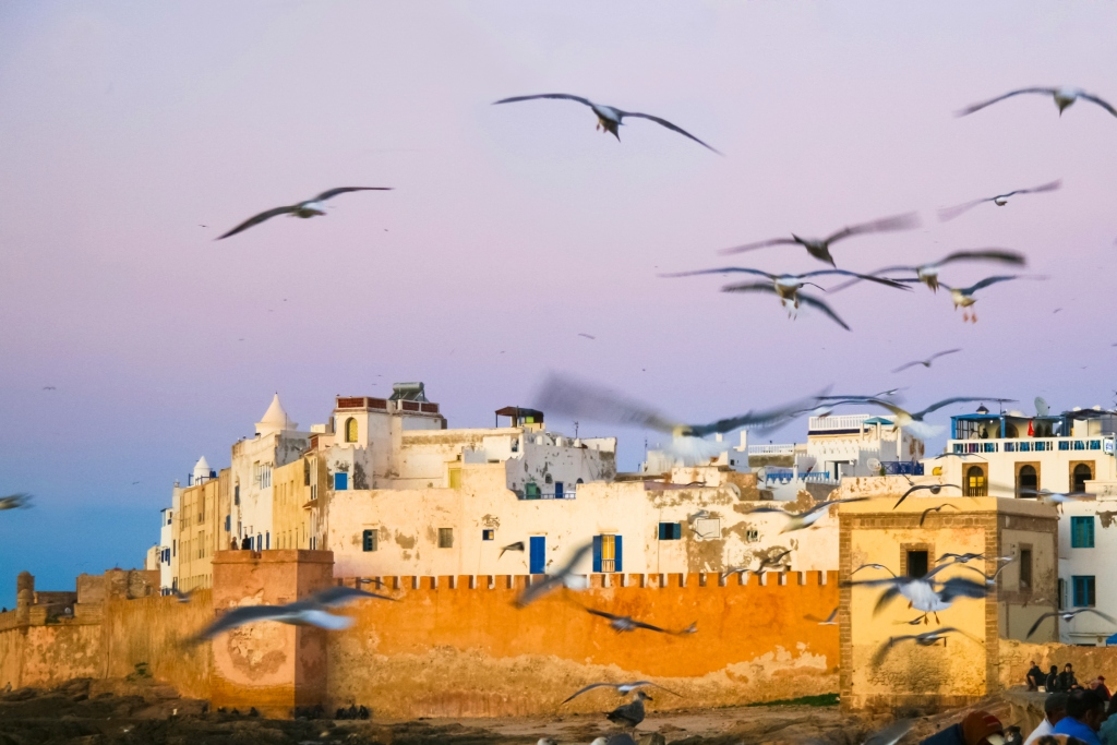 Seagulls fly over Essaouira's fortified wall, Morocco