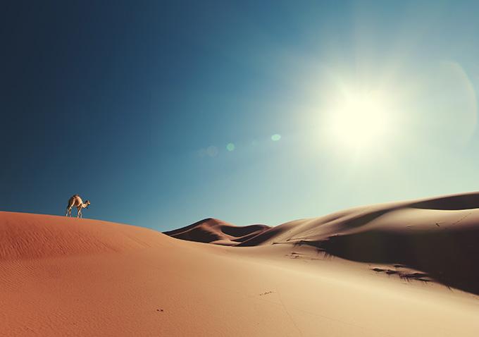 Μια καμήλα στους αμμόλοφους στην έρημο του Μαρόκου