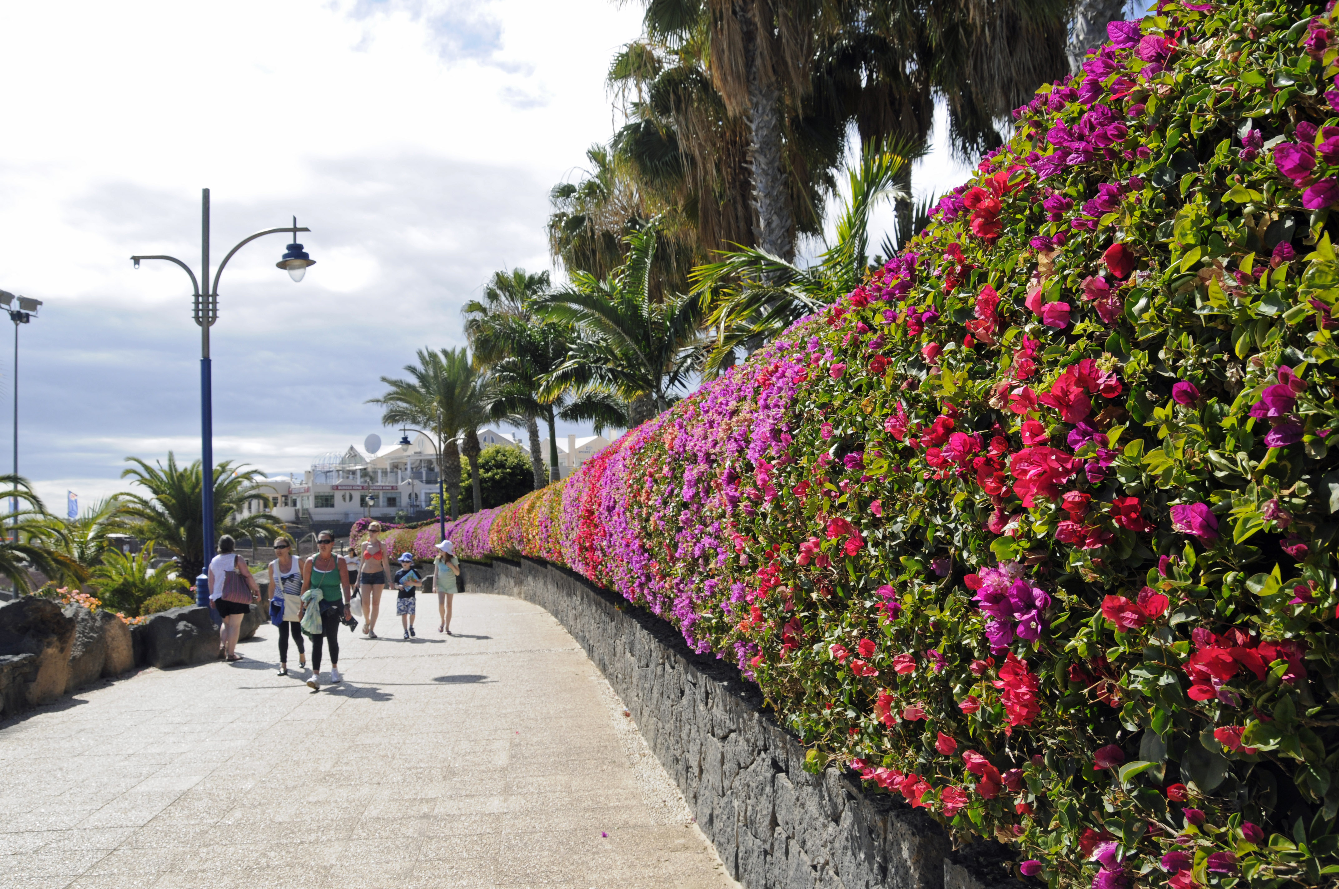 Flowers blossom in Lanzarote