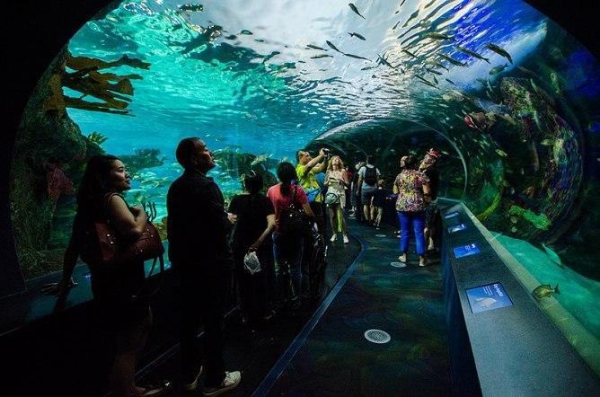Inside Ripley's Aquarium's water tunnel.