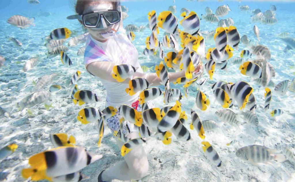 Παρατηρώντας πολύχρωμα ψάρια φορώντας μάσκα στο βυθό.