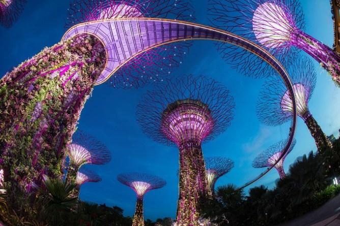 Фантастические «Супердеревья» в Садах у Залива в Сингапуре