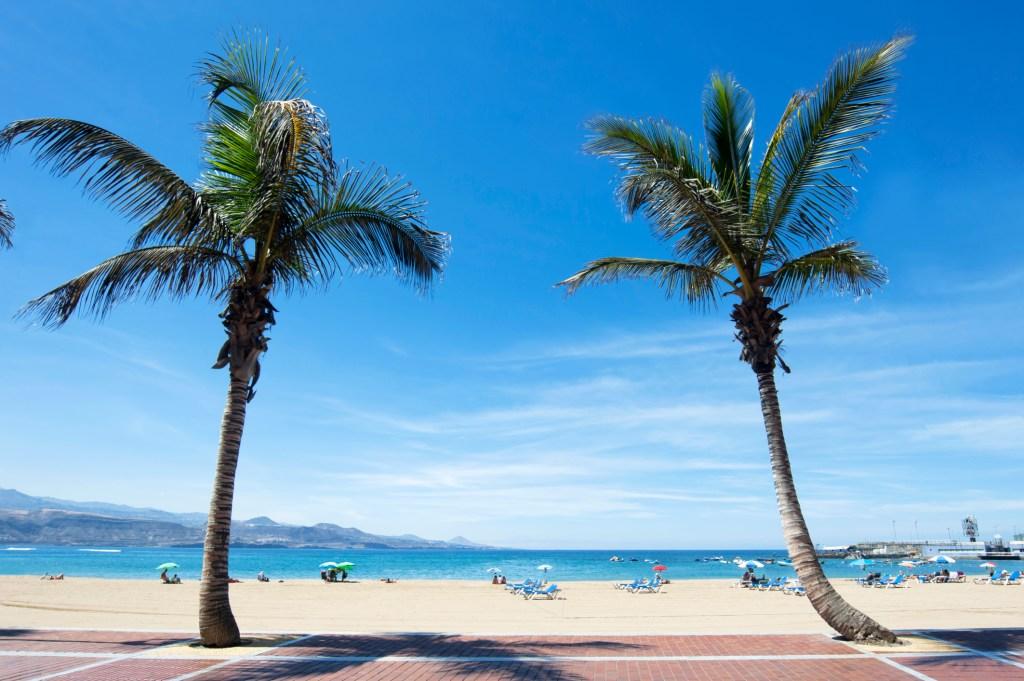 Δύο φοίνικες στην παραλία Λας Καντέρας, Γκραν Κανάρια