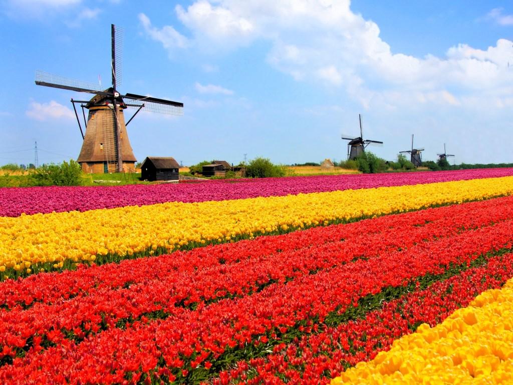 Qué ver en Ámsterdam: tulipanes