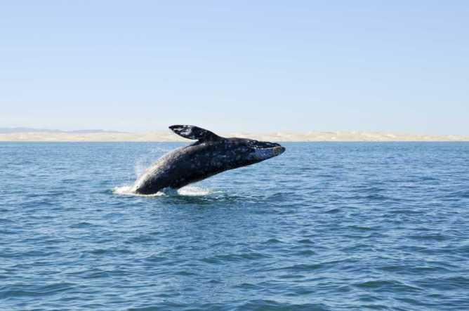 Πήδημα φάλαινας στον ωκεανό