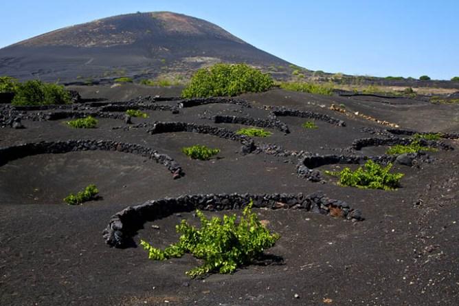 Οι ηφαιστειακοί αμπελώνες της La Geria, Λανθαρότε