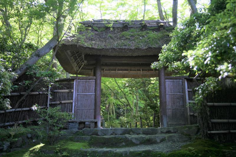 初夏の祇王寺