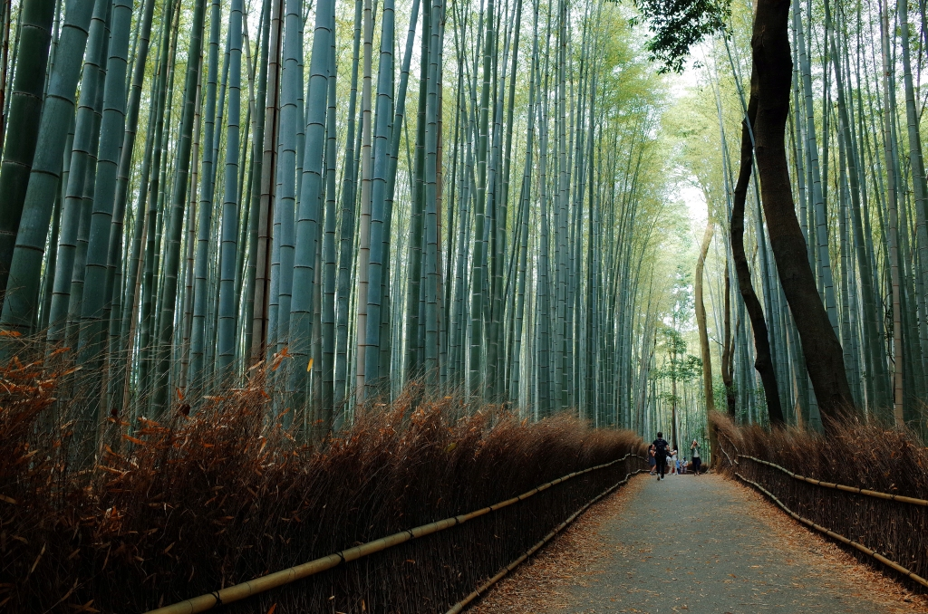 Bosque de Bambú - When is the Best Time to Visit Japan in 2020
