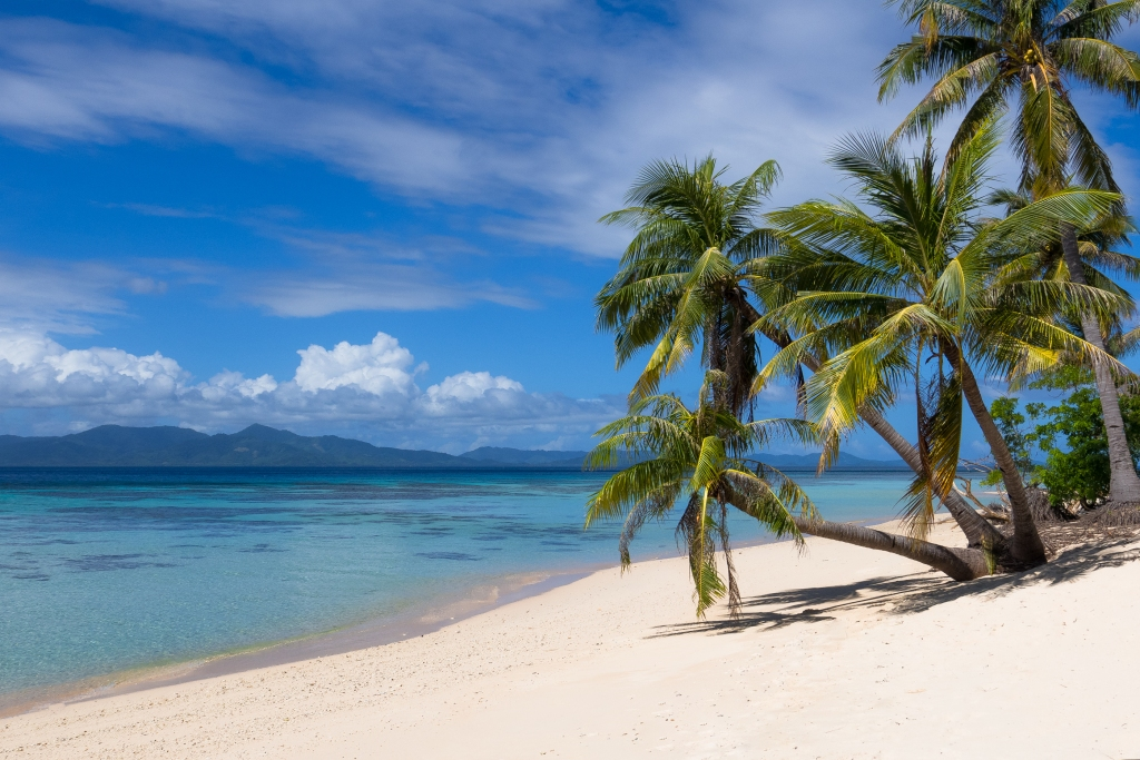 white sandy beach with palm trees