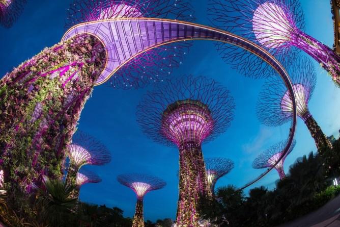 «Супердеревья» в сингапурских Садах у Залива