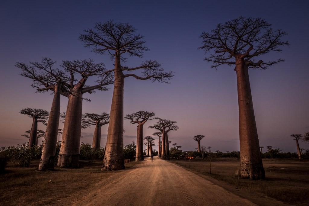 madagascar-baobab-eyeem