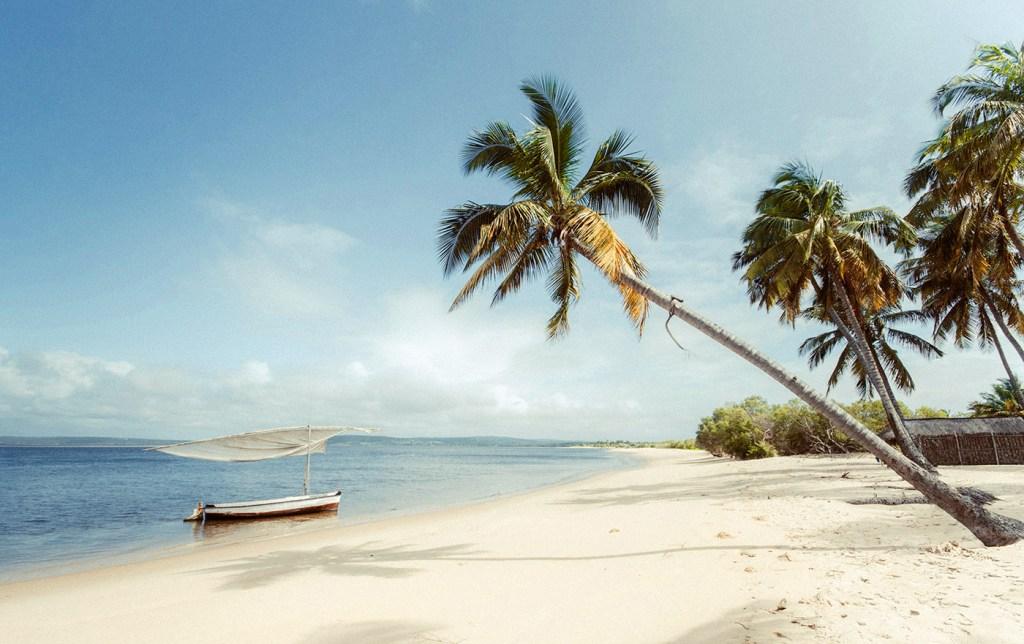 Palm trees – Mozambique