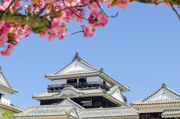 愛媛県 桜と松山城天守閣