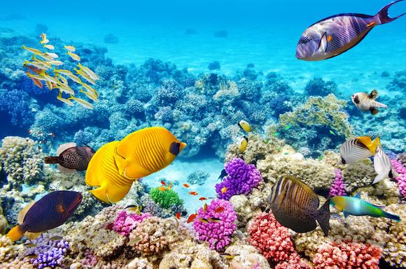 色とりどりの海底世界(イメージ)