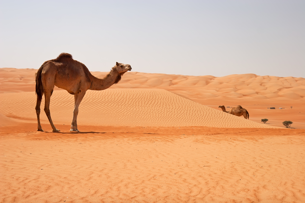 今年行くべき旅先トップ10 オマーン Oman 砂漠 ラクダ