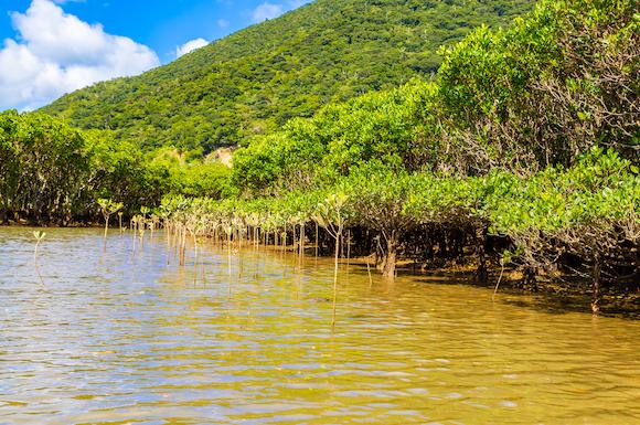 鹿児島 奄美大島 マングローブ原生林