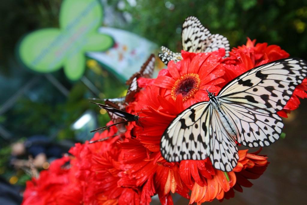 Сад бабочек в аэропорту Сингапура Чанги
