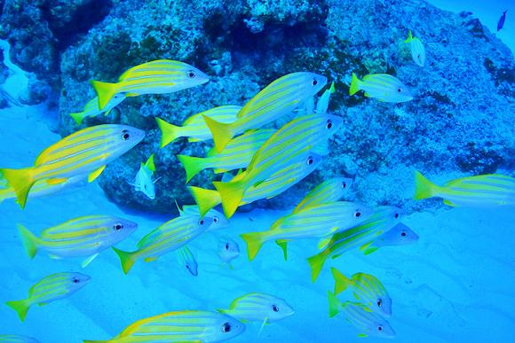 グアム カラフルな魚たちが泳ぐ
