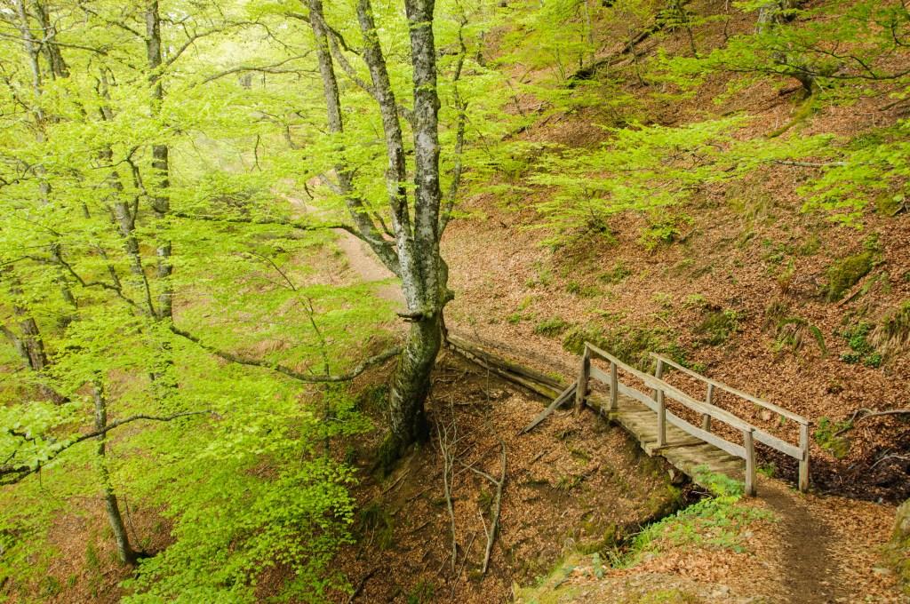 Rutas de senderismo por Asturias: Tabayón de mongayo