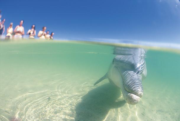 Underwater view of bottlenose dolphin, Monkey Mia
