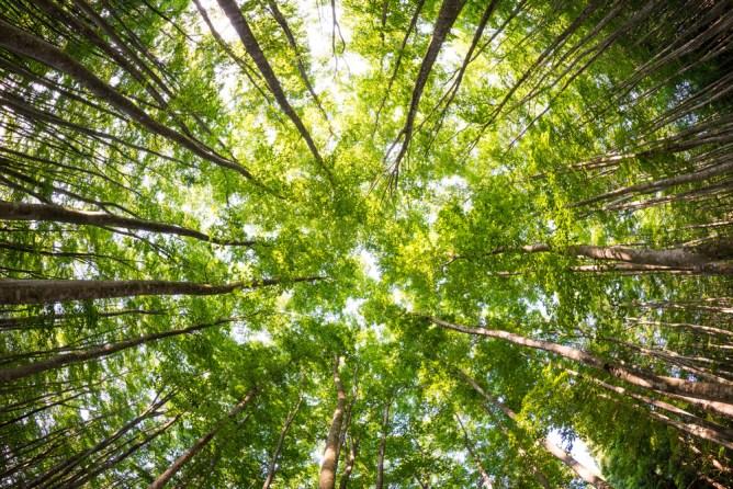 新潟県 美人林